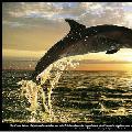 0-dolphin-0