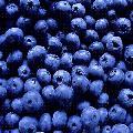 `blue;;berr'Y'aoi*_,,