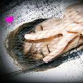 Benzii ♥ TheCrazy