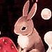 Rabbit Saga รหัสพันธุ์ลับ