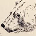 ๏ำลุงหมี๏
